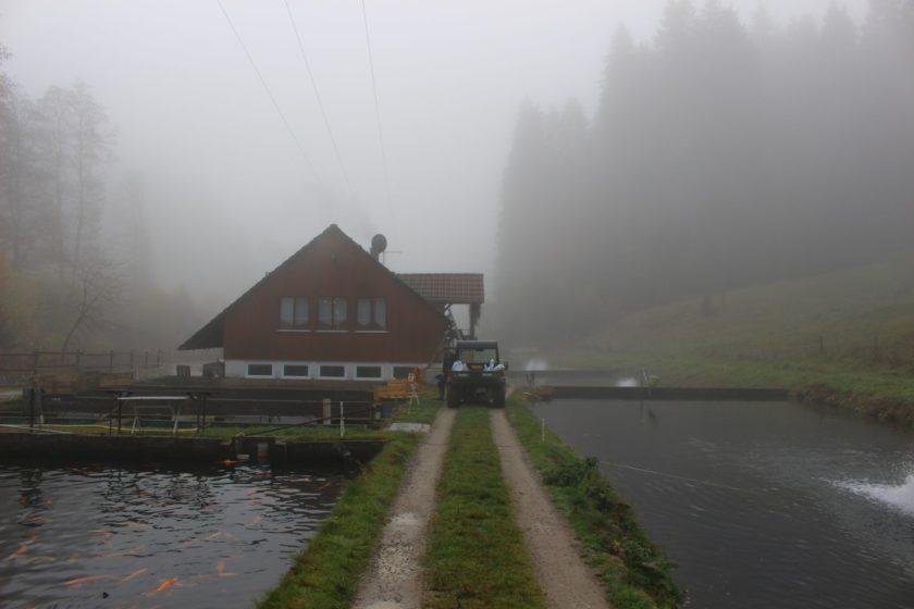 trip-alpirsbach-schwarzwald-79