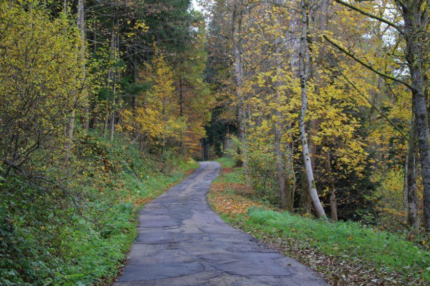 trip-alpirsbach-schwarzwald-85